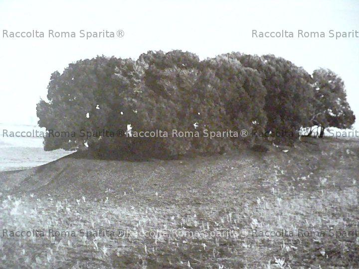 Caffarella