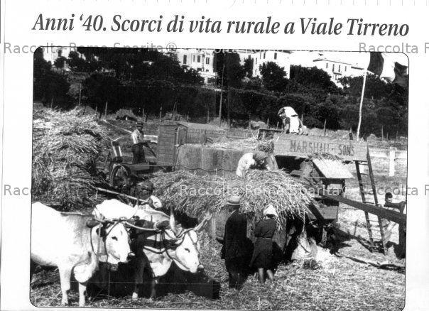 Viale Tirreno