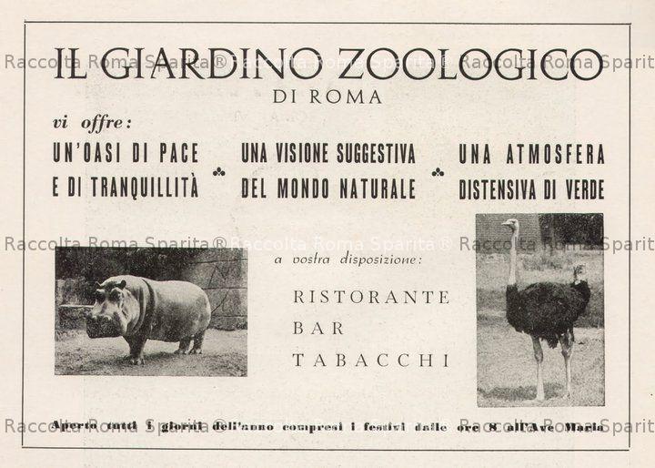 Pubblicita' Zoo