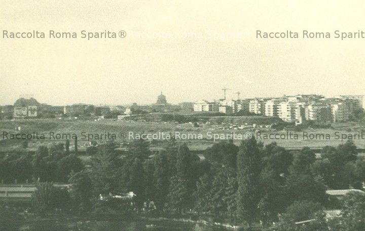 romasparita_sds2961