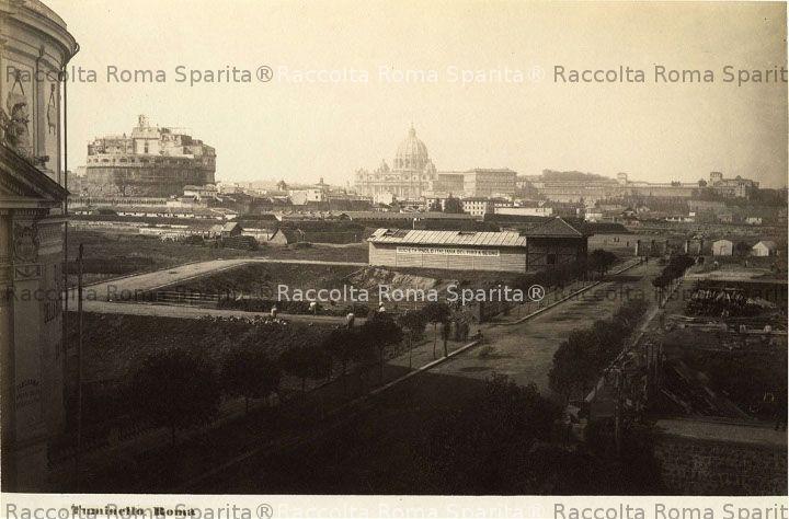 romasparita_sds2969