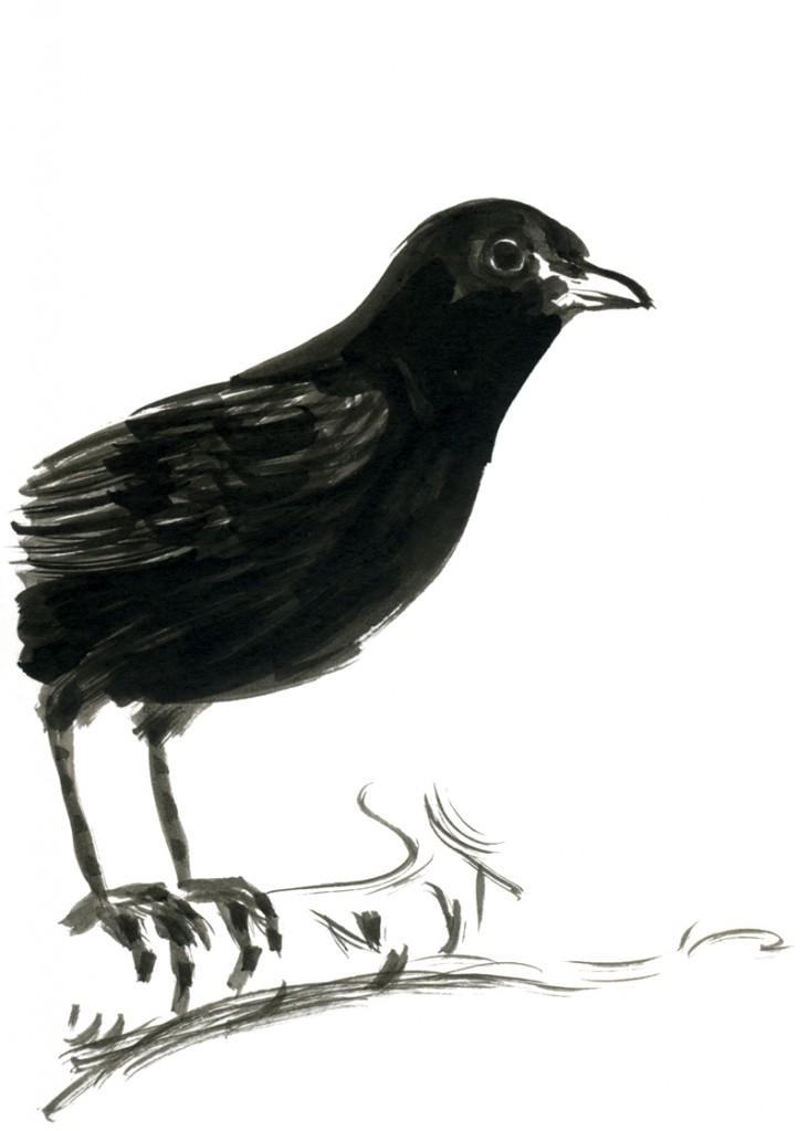 Immagine realizzata da Elisabetta Benfatto: fumettista, illustratrice